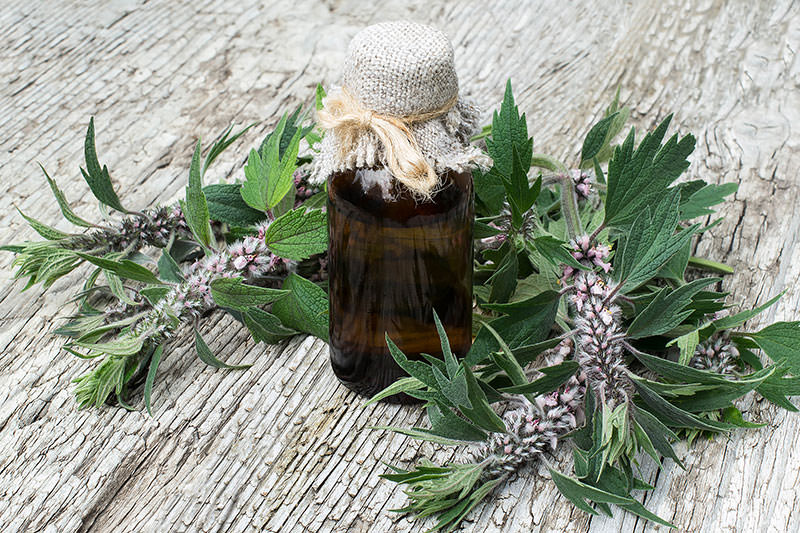 motherwort and medicine bottle