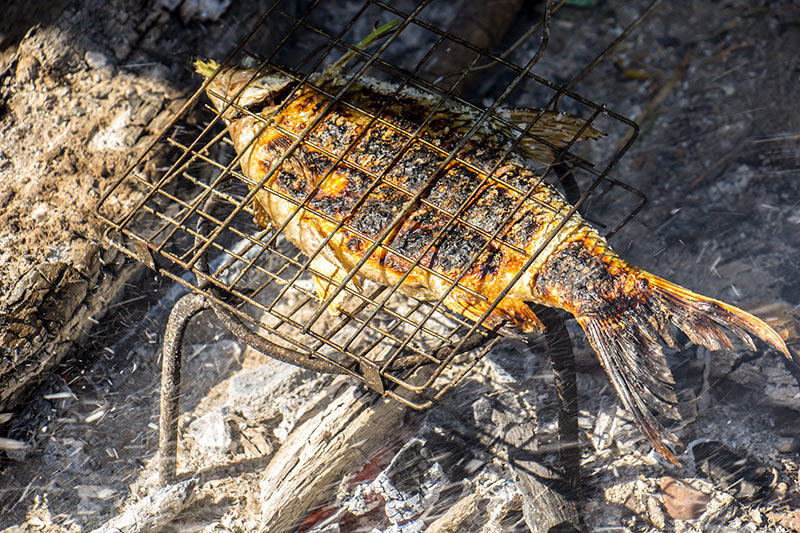 cooking fish in a grill basket on a campfire