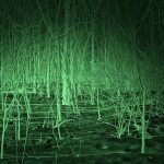 forest night vision